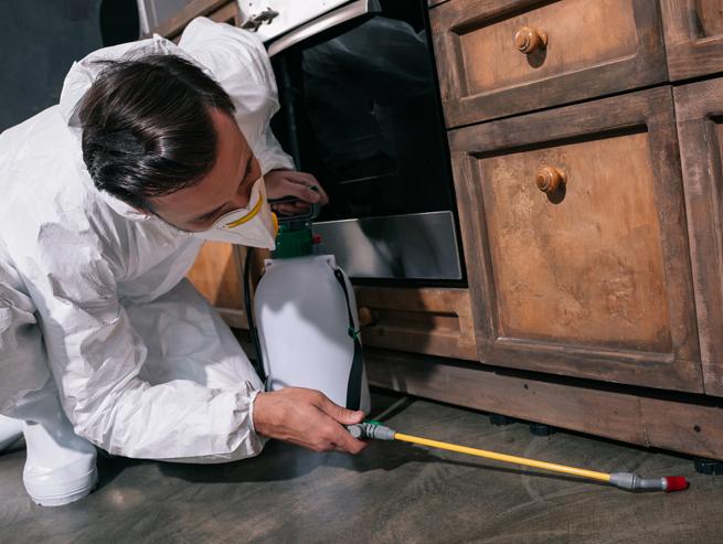 spraying-under-furniture-968369033.jpg
