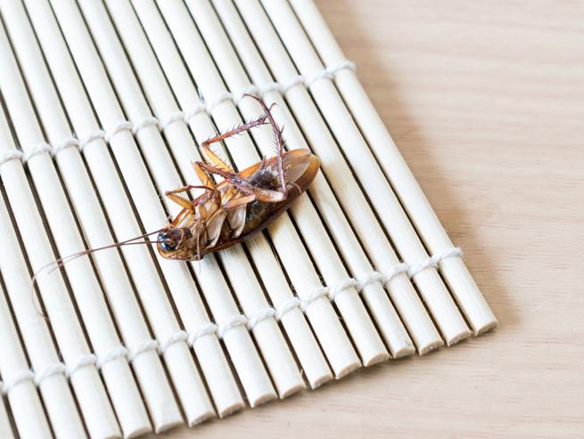 dead-cockroach-231386073.jpg