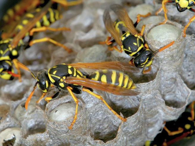 hornets-in-their-nest-795779691.jpg