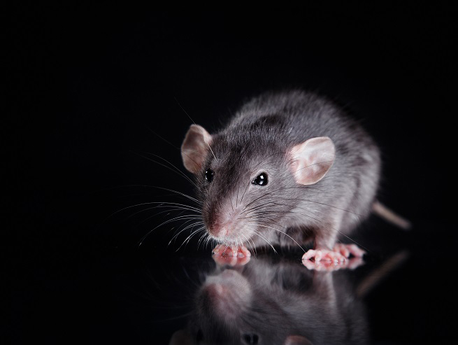 mouse-on-glass-733311202.jpg