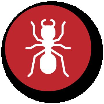 icon ants