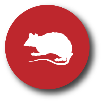 button-rodents-wildlife@2x.png