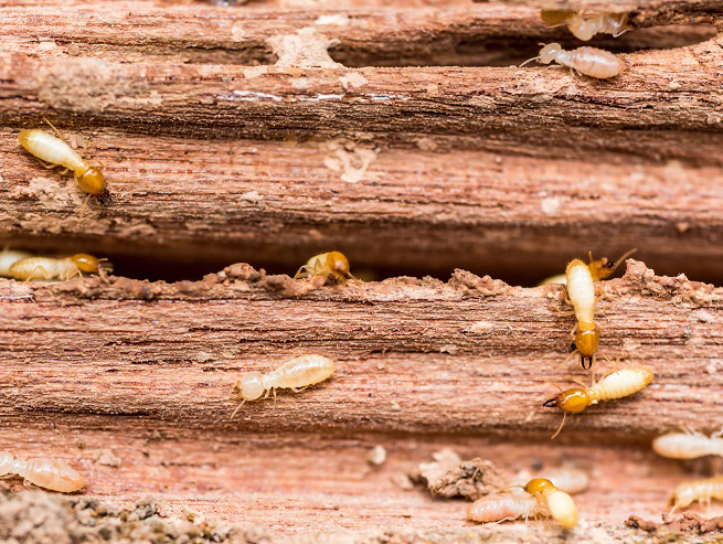 many-termites-at-work-972967532.jpg