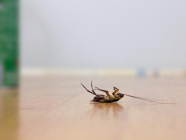 dead-roach-432666471.jpg
