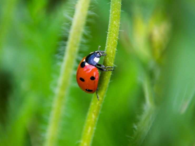 lady-bug-on-grass-902829427.jpg